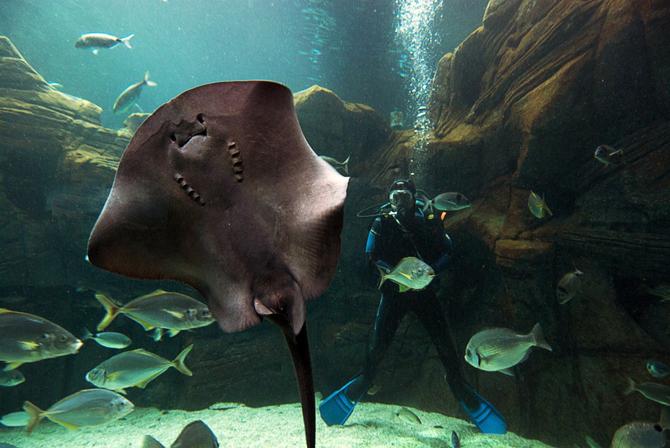 Aquarium of Crete (Cretaquarium), Monuments & sights, wondergreece.gr