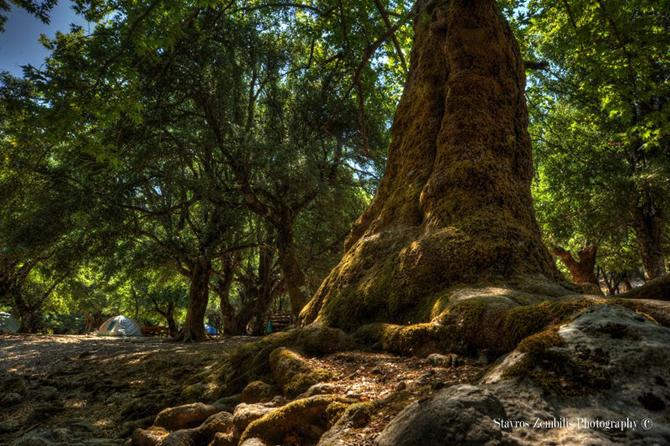 Rouvas Forest, Forests, wondergreece.gr
