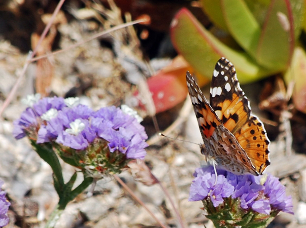The Valley of the Butterflies , Monuments & sights, wondergreece.gr