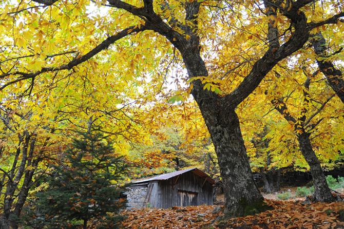 Πάρνωνας, Βουνά, wondergreece.gr