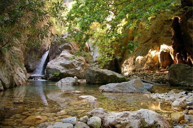 Δάσος Σκυρίτιδας, Δάση, wondergreece.gr