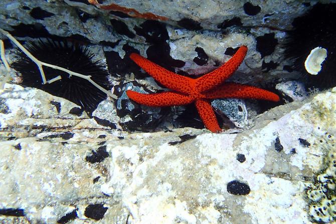 Scuba Diving , Scuba Diving, wondergreece.gr