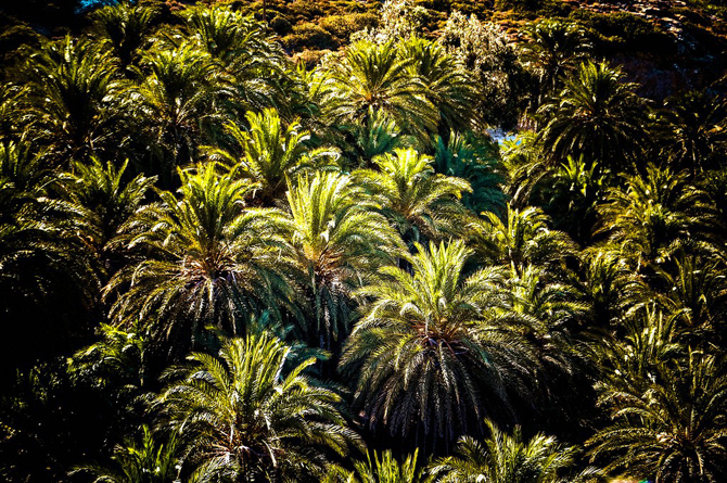 Vai palm grove, Forests, wondergreece.gr