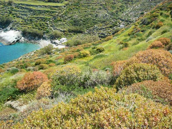 Σερφιώτικο, Παραλίες, wondergreece.gr