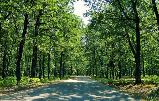 Foloi, Forests, wondergreece.gr
