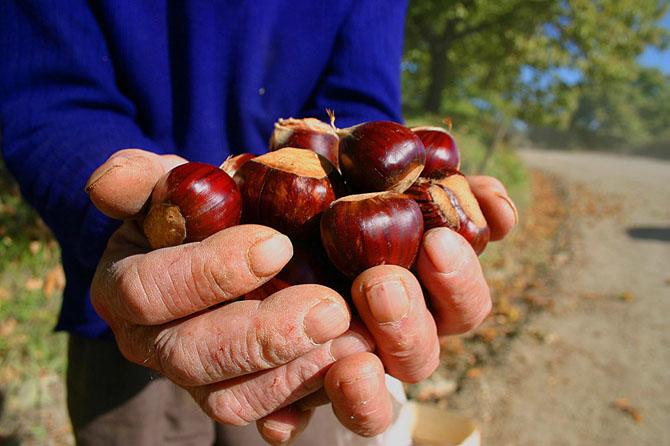 Chestnut Festival, Traditional events & Festivals , wondergreece.gr