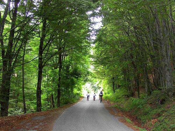 Forest of Polydendri, Forests, wondergreece.gr