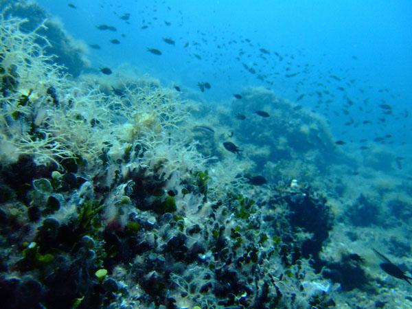 Scuba Diving, Scuba Diving, wondergreece.gr