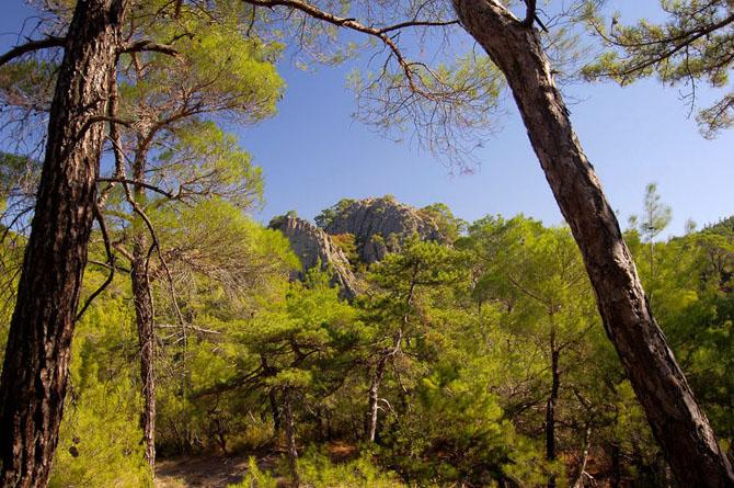 Εθνικό Πάρκο Δάσους Δαδιάς, Δάση, wondergreece.gr