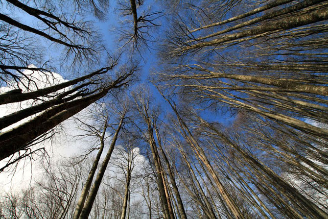 Haintou forest, Forests, wondergreece.gr