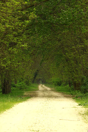 Koja-Orman Forest, Forests, wondergreece.gr