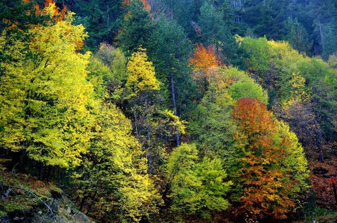 Pindos National Park (Valia Calda), Forests, wondergreece.gr