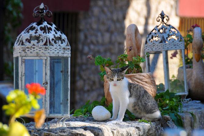 Afytos, Main cities & villages, wondergreece.gr