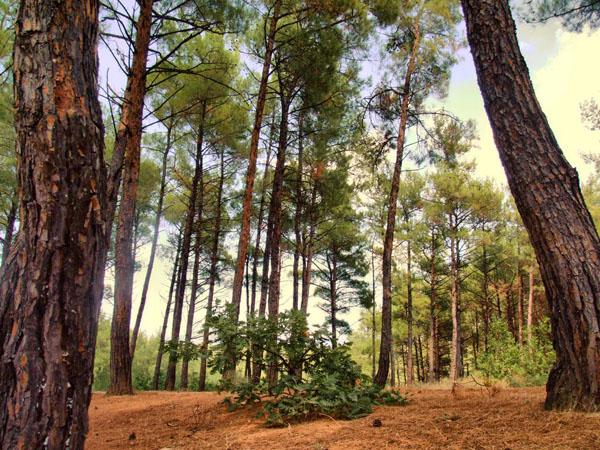 Δάσος Νυμφαίας, Δάση, wondergreece.gr