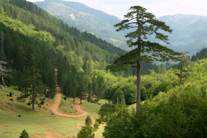 Pindos National Park (Valia Calda), Forests, wondergreece.gr
