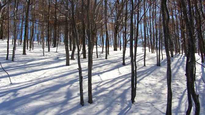 Vitsi Ski Center , Ski - Snowboard, wondergreece.gr