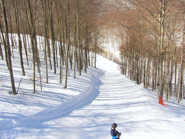 3-5 Pigadia Ski Center , Ski - Snowboard, wondergreece.gr