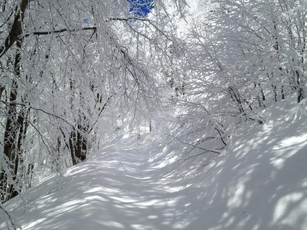 Βαρνούντας (Πισοδέρι), Βουνά, wondergreece.gr