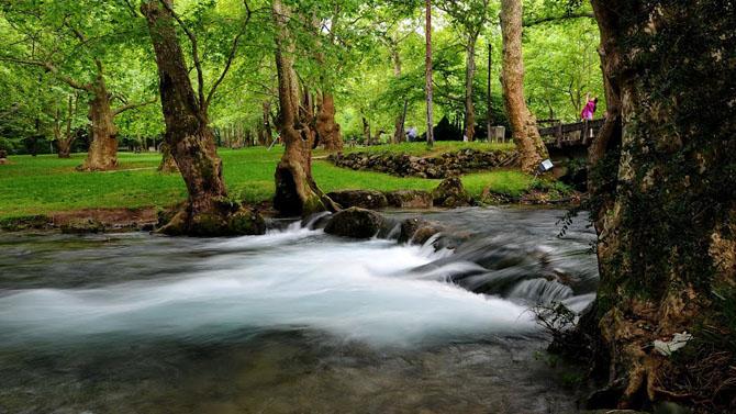 Agios Nikolaos grove, Forests, wondergreece.gr