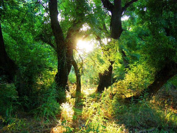 Φράξος, Δάση, wondergreece.gr