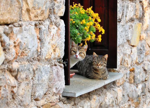 Ναύπακτος, Πόλεις & Χωριά, wondergreece.gr