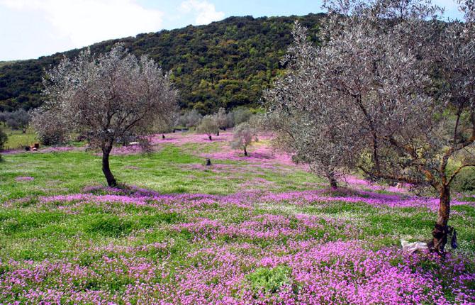 Παραμυθιά, Πόλεις & Χωριά, wondergreece.gr