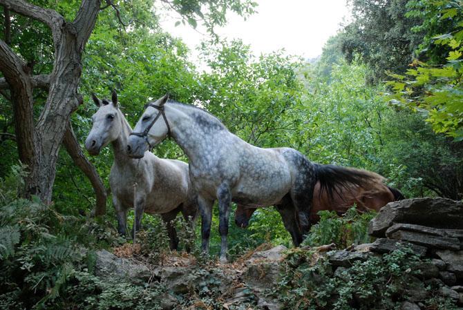 Mount Ochi, Mountains, wondergreece.gr