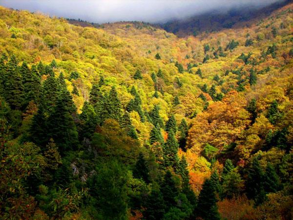 Steni Forest (Dirfys), Forests, wondergreece.gr