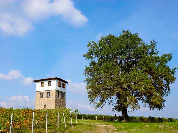 Kir-Yianni Winery, Wineries, wondergreece.gr