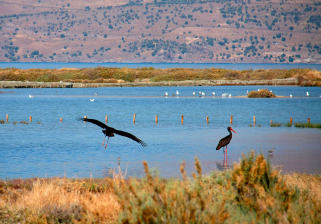 Wetland habitats of Kalloni, Monuments & sights, wondergreece.gr