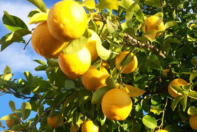 Λεμονοδάσος, Δάση, wondergreece.gr