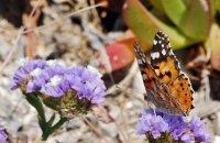 The Valley of the Butterflies , Paros, wondergreece.gr