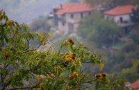 Ano Doliana, Arcadia Prefecture, wondergreece.gr