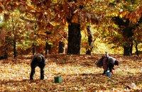 Ο Οκτώβριος κλείνει με γιορτές κάστανου & τσίπουρου , Άρθρα, wondergreece.gr