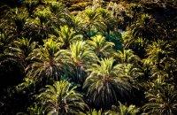 Vai palm grove, Lasithi Prefecture, wondergreece.gr