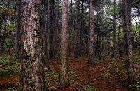 Αισθητικό Δάσος Πευκιά, Ν. Κορινθίας, wondergreece.gr
