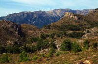 Selekano Forest, Lasithi Prefecture, wondergreece.gr