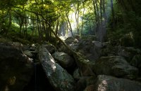 Pelion, Magnesia Prefecture, wondergreece.gr