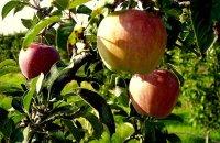 Γιορτή Μήλου , Ν. Λαρίσης, wondergreece.gr