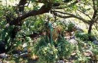 Forest of Skaros, Lefkada, wondergreece.gr