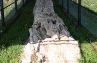Petrified Forest of Tychero, Evros Prefecture, wondergreece.gr