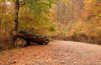 Haintou forest, Xanthi Prefecture, wondergreece.gr