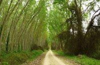 Koja-Orman Forest, Xanthi Prefecture, wondergreece.gr