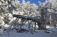 Parnitha, Attiki Prefecture, wondergreece.gr