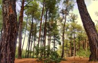 Forest of Nymfea, Rodopi Prefecture, wondergreece.gr