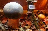 Mushroom Museum, Grevena Prefecture, wondergreece.gr