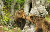 Bears woke up and are receiving visitors!, Articles, wondergreece.gr