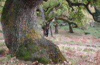 Oak Woodland (Velinodasos) of Xeromero  , Aetoloakarnania Prefecture, wondergreece.gr