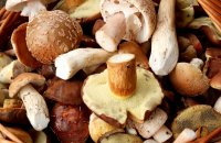 10th Panhellenic Mushroom Festival, Articles, wondergreece.gr