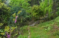 Forest of Kavala, Kavala Prefecture, wondergreece.gr